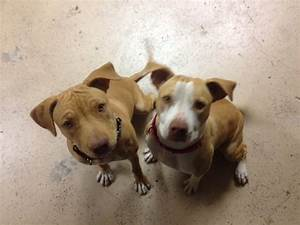 Orange County Humane Society - Huntington Beach, CA   Yelp
