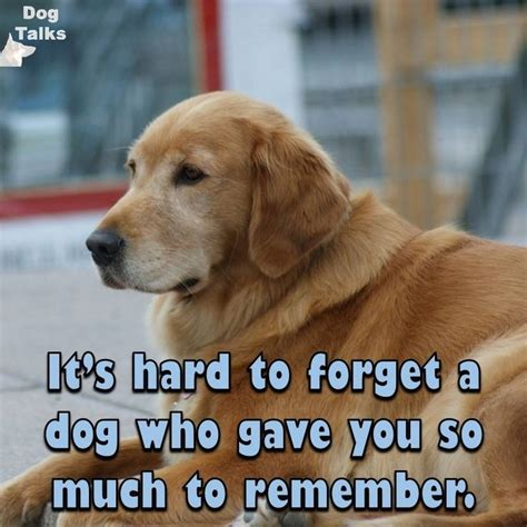 dog lovers images  pinterest animal pictures