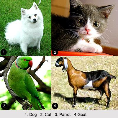 indian pet animals