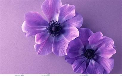 Purple Wallpapers Flower Flowers Fire Kindle Desktop