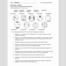 Chapter 10 Mendel And Meiosis Worksheet Answers Siteraven