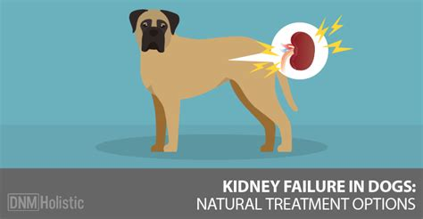 natural options  kidney disease failure
