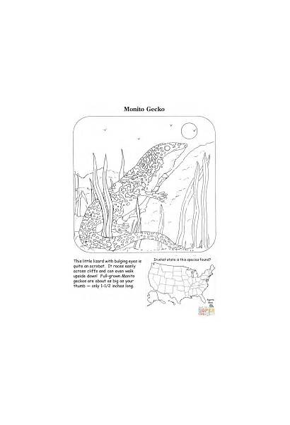 Gecko Coloring Pages Monito Reptiles Lizards Printable