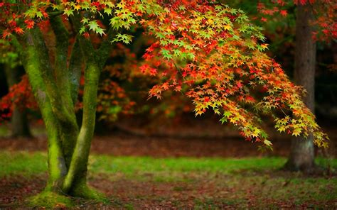 Beautiful Autumn Trees Wallpapers by Beautiful Trees Wallpaper Wallpapersafari
