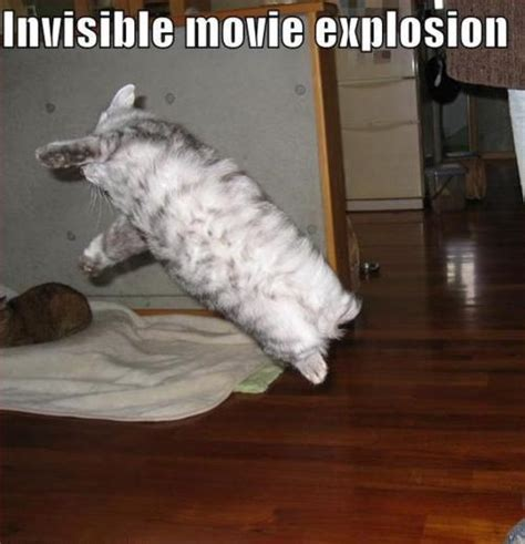 Invisible Cat Memes - lolcat invisible explosion funny cat pictures
