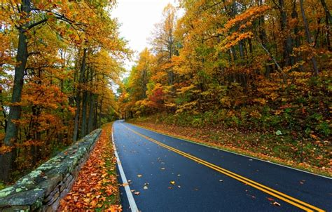wallpaper road autumn leaves nature mountain colors