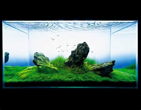 Ada Aquascape by Ada Nature Aquarium Aquascape The Green Machine
