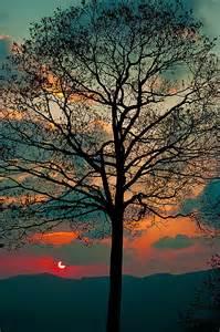 Sunrise Sunset Tree