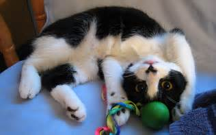Image result for cat playing