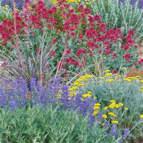high country gardens pioneers in sustainable gardening