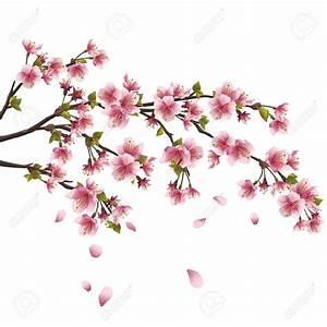 Dessin Fleur De Cerisier Japonais Noir Et Blanc : branche de cerisier japonais galerie tatouage avec dessin ~ Melissatoandfro.com Idées de Décoration
