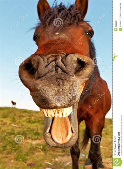 lustiges pferd stockfoto bild von jade topf kerbe tier