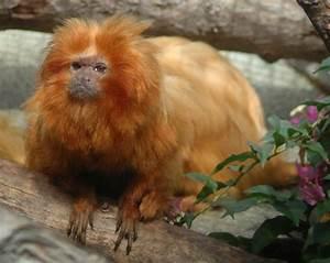 Pictuer Plus: Rare Animals