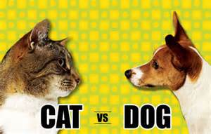 dogs vs cats official dogs vs cats page 74 poll station neowin forums