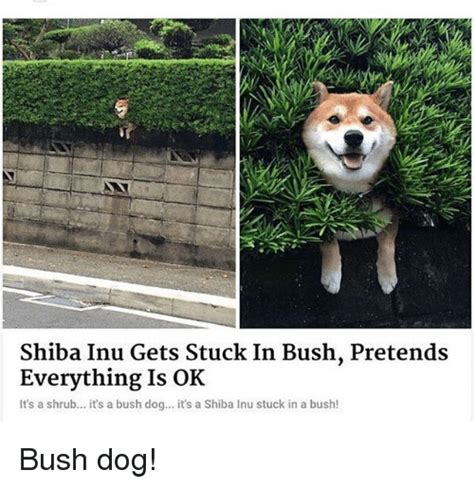 Shiba Inu Memes - 25 best memes about shiba inu shiba inu memes
