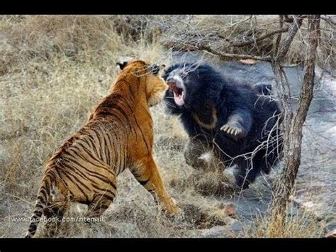 biggest wild animal fights youtube