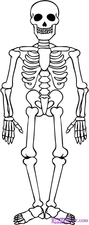 draw  skeleton  dawn skeleton drawings