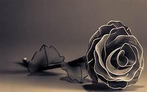 Black And White Rose Wallpaper 27 Wide Wallpaper ...