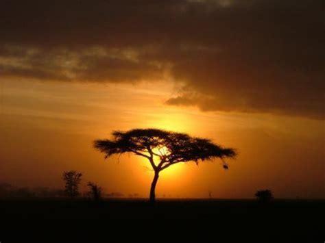 tanganyika expeditions tanzania safari