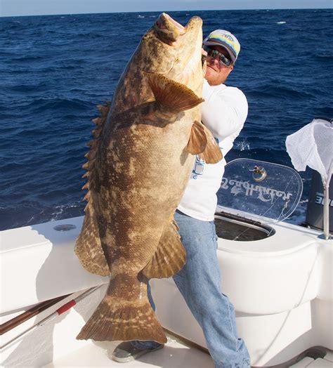 fishing grouper goliath gulf mexico key west florida reef keys charter