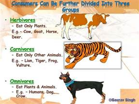chain webs trophic dog level animals gaurav eat consumers primary plants omnivores vulture crow humans