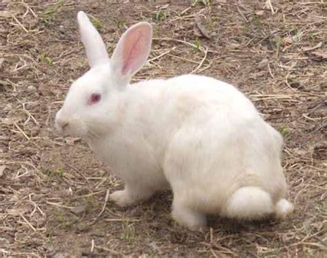 Rabbit Farming In Kenya