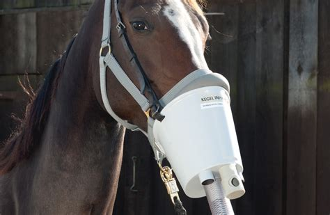 abfohlsystem waechtomat pferdeinhalator akku inhalator