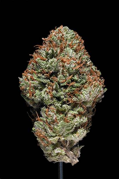 Weed Marijuana Shelf Bud Dank Bad Gifs