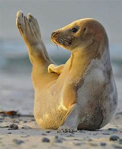 40 Cute and funny Pictures of Animals Enjoying Beach ...