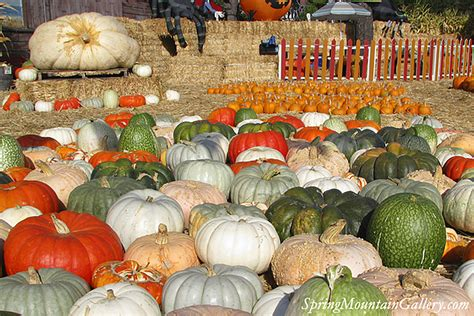 Half Moon Bay Pumpkin Patches by Pumpkin Patches And Farms Visit Half Moon Bay