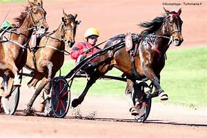 Jockey Ou Driver   Quelles Diff U00e9rences   Notre Guide