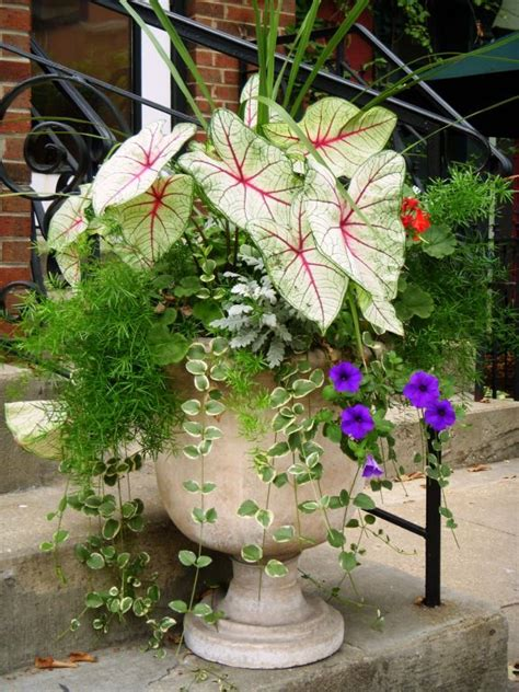 outside flower arrangements 25 best ideas about outdoor pots on pinterest potted plants outdoor potted plants and potted