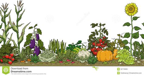 Vegetable Garden Bed Stock Vector Illustration Of Food