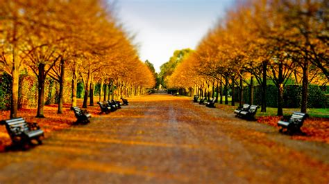 bench tree autumn fall landscape nature tree forest leaf leaves path