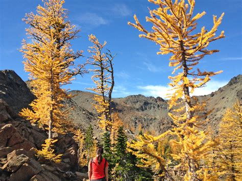 hikes washington fall state larch colors lake seeing magical