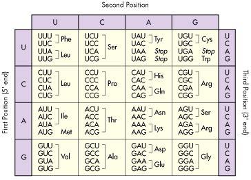 amino acid chart genetic code dna data constants  equations tritech research