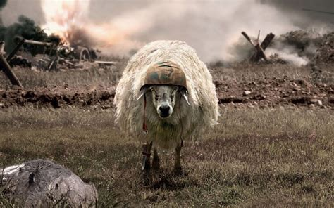 war sheep helmets battlesheep wallpaper