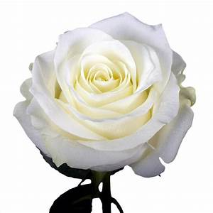Globalrose 50 White Roses- Fresh Flower Delivery-50