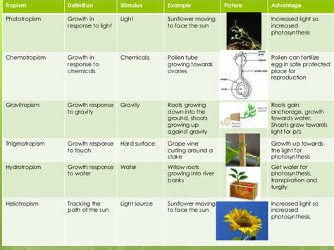 Plant Tropism Worksheet Calleveryonedaveday