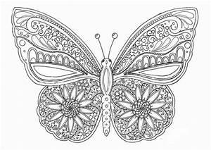 Ausmalbilder, Fur, Erwachsene, Schmetterlinge