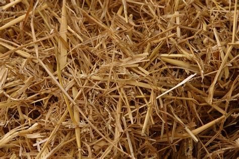 straw matting for grass seeding why put straw on grass seed home guides sf gate