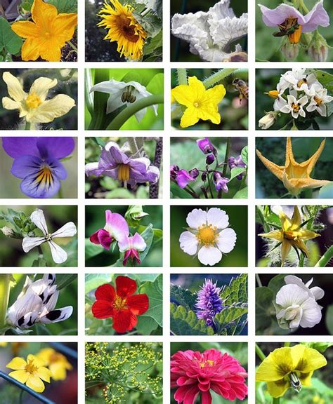 bee attracting flowers helpful hints garden