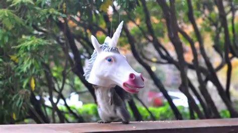 unicorn squirrel feeder archie mcphee youtube
