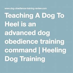 1000 ideas about dog obedience training on pinterest With advanced dog training