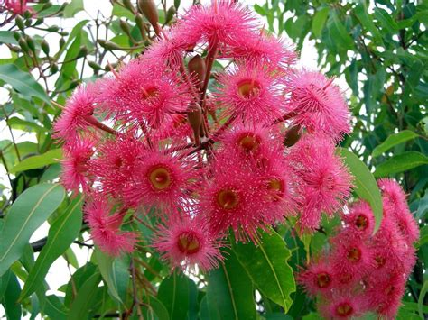 Australian Native Plants  A Year In A Gippsland Garden