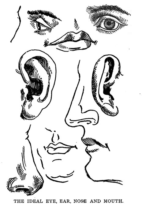 drawing  human body figure  memorizing human