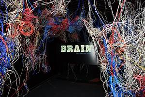 An Inside Look At The Brain At Ontario Science Centre