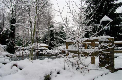 immergruen winterhart oder schutzbeduerftig