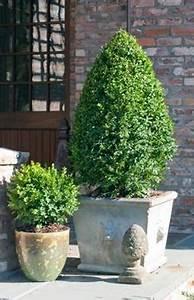 Arbuste Persistant En Pot : buis en pot ~ Premium-room.com Idées de Décoration