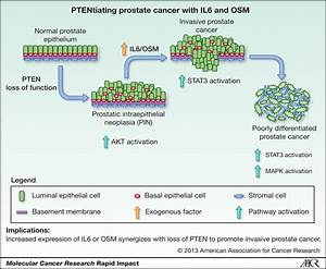 Interleukin-6 and Oncostatin-M Synergize with the PI3K/AKT ...